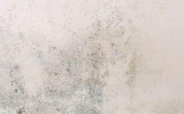 Hoe moet je vochtige binnenmuren behandelen?